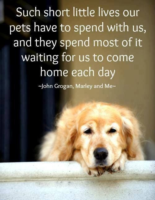 quotes-about-dogsmy-favorite-quotes-about-dogs-qv4mh3ar